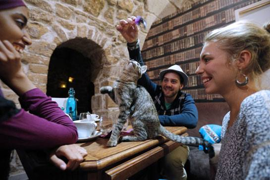 cafe-des-chats