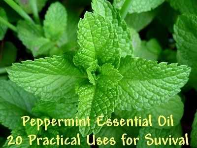 20-Uses-Peppermint-Essential-Oil