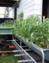 backyard-aquaponics-system-300x225