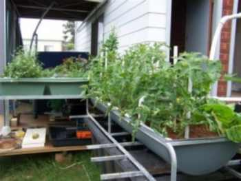 backyard-aquaponics-system-300x225