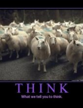 sheep-think-300x240