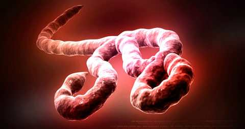 an introduction to the issue of the ebola virus one of the most deadly viruses The ebola virus introduction the most deadly killers on this earth are too small to see with the naked eye these microscopic predators are viruses in my.