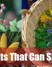 20-Wild-Plants-That-Can-Save-Your-Life-jpg-890x395