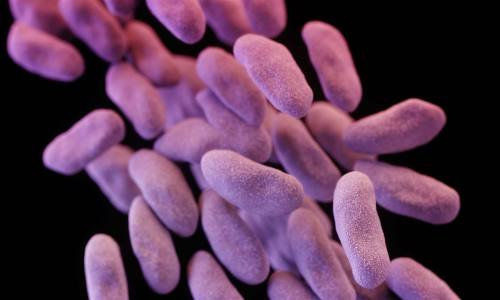 a_30stk_superbug_fox_150220.nbcnews-ux-1240-700