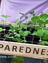 Preparedness-Garden-Leafy-Greens