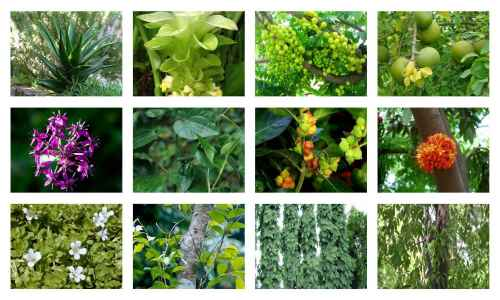 These Plants Kill All Viruses in the Body and Strengthens the Immune System (Powerful Antiviral Herbs That Boost the Immune System, Reduce Inflammation and Fight Infections)